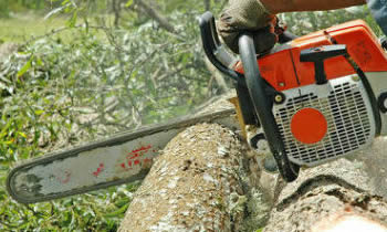 Tree Removal in West Palm Beach FL Tree Removal Quotes in West Palm Beach FL Tree Removal Estimates in West Palm Beach FL Tree Removal Services in West Palm Beach FL Tree Removal Professionals in West Palm Beach FL Tree Services in West Palm Beach FL