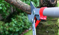 Tree Pruning Services in West Palm Beach FL